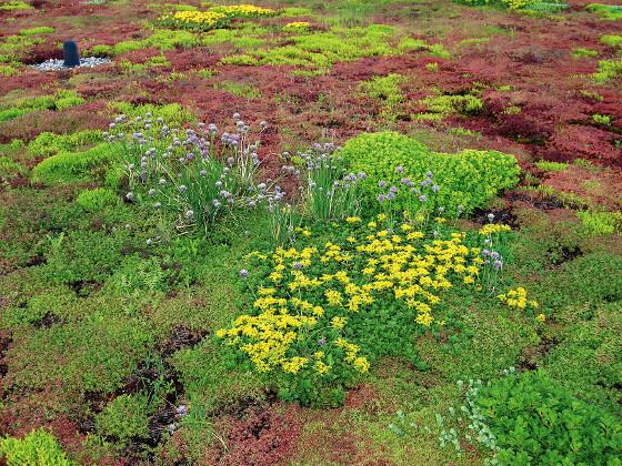 Extensive Dachbegrünung Pflanzen : die richtigen pflanzen f r eine dachbegr nung energie fachberater ~ Frokenaadalensverden.com Haus und Dekorationen
