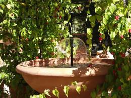 pflanzen als sonnenschutz f r terrasse und balkon. Black Bedroom Furniture Sets. Home Design Ideas