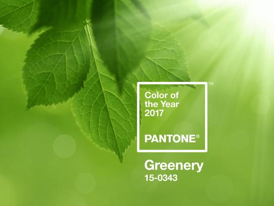 Greenery   Farbe Des Jahres 2017 Bild Größer Anzeigen