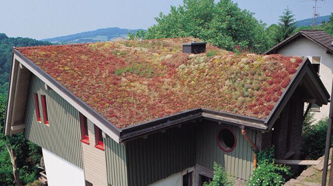 Etwas Neues genug Dachbegrünung - ENERGIE-FACHBERATER @JU_35