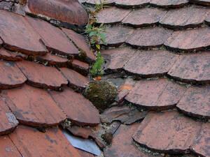 Dach mit gebrochenen Dachziegeln und Pflanzenwachstum